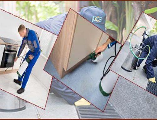 شركة مكافحة حشرات راس الخيمة |0507429220|ممر السلام